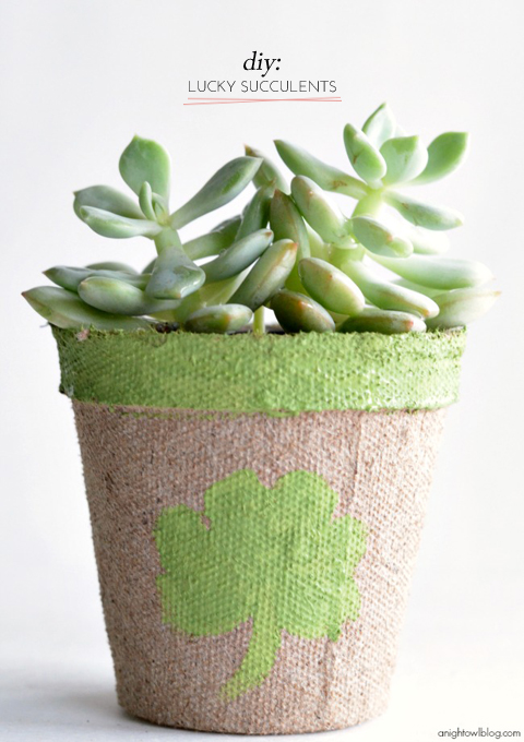 diy-lucky-succulents