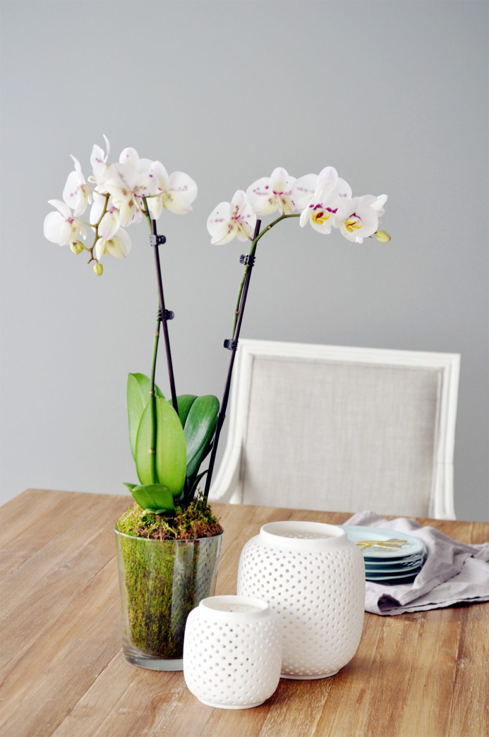 1 - Potted Orchid