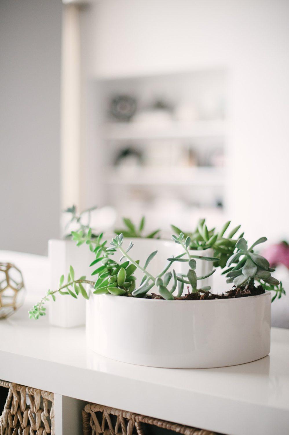 Potted succulents | Lark & Linen Interior Design